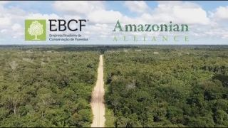 ICO Amazonians Green Coin VIDEO on the ICO List - ICOLINK